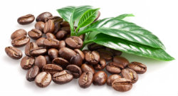 Finest Arabica Coffee Beans
